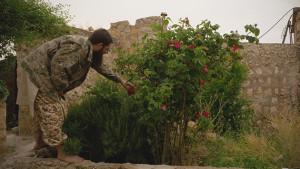 Al Qaida hygger seg med rosebusk. Foto: Pål Refsdal/